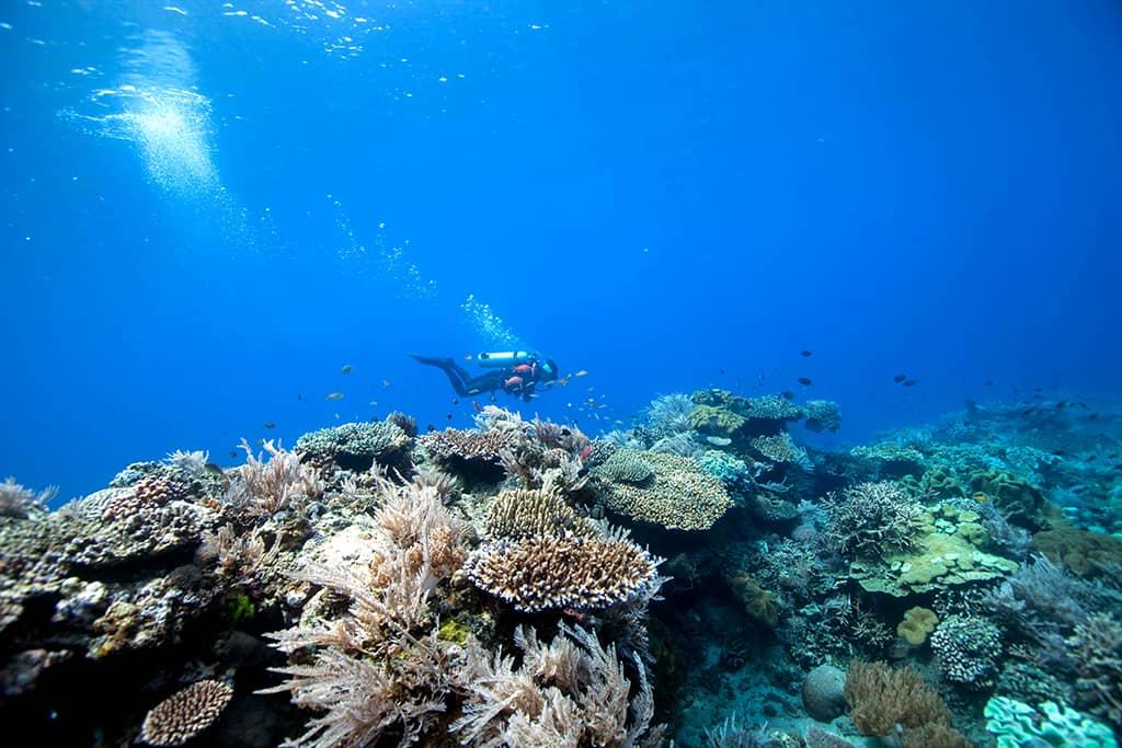 The SCUBA Dive Series: Part 1 – Lighthouse Bay